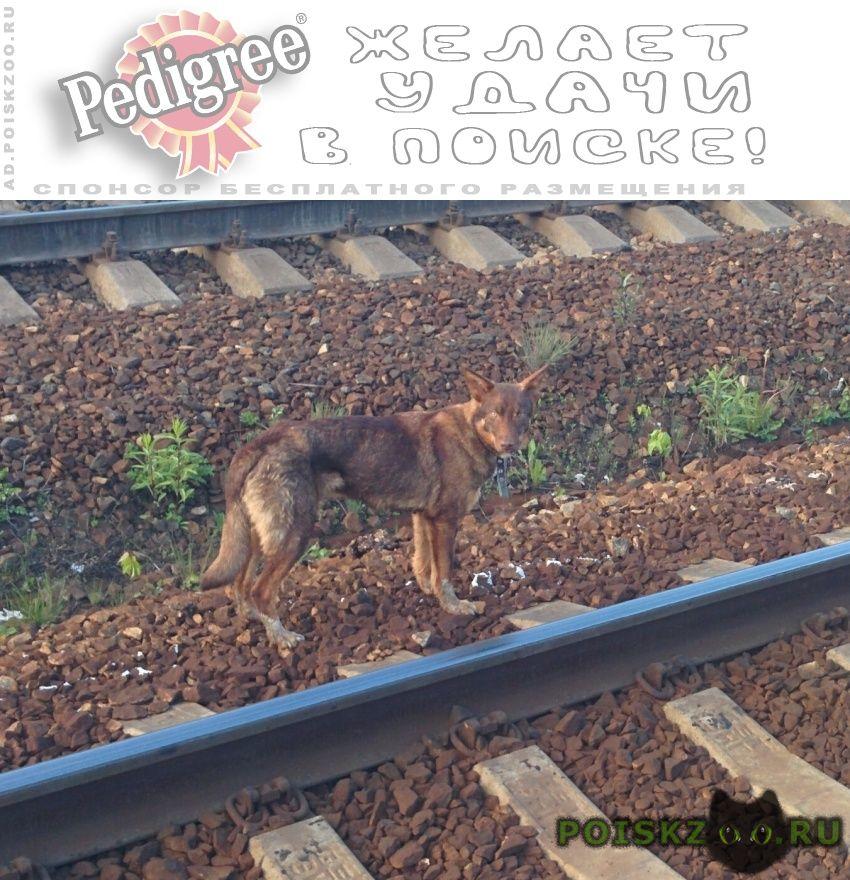 Найдена собака рыжая, белые лапы (ул. карьерная, екб) г.Екатеринбург
