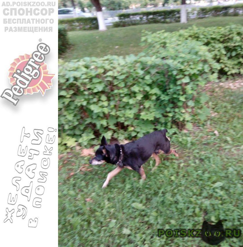 Найдена собака г.Коломна