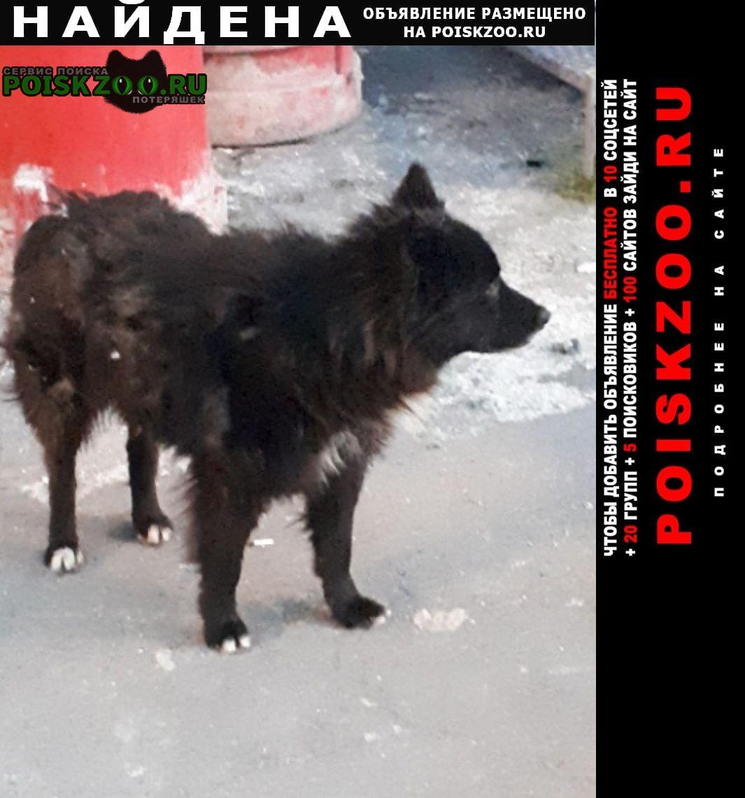 Найдена собака черная лохматая Москва