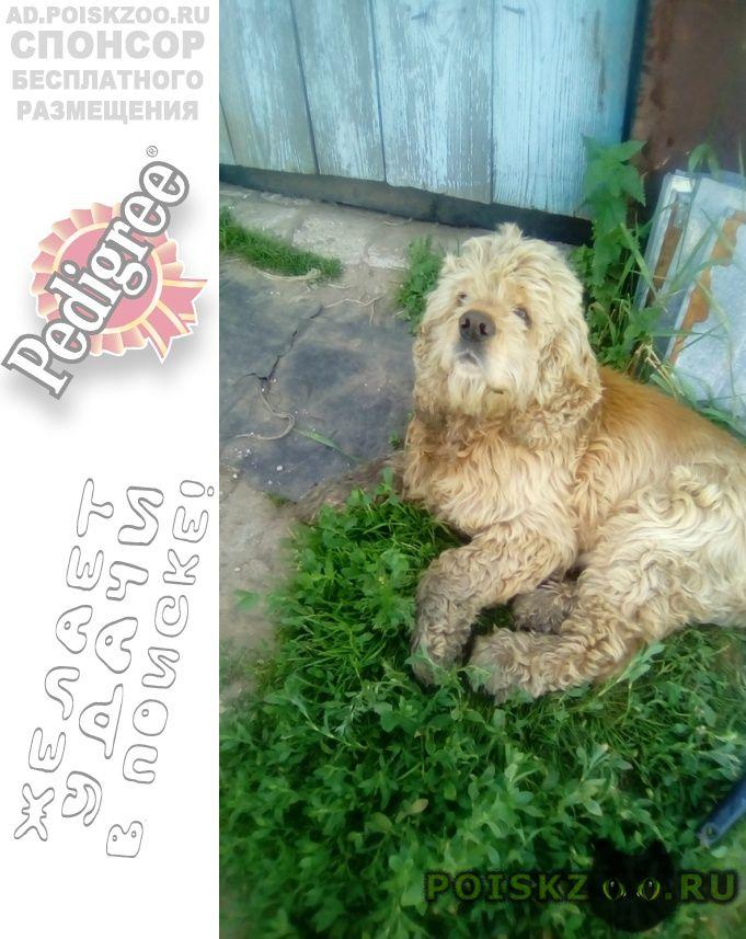 Найдена собака кобель г.Павлово