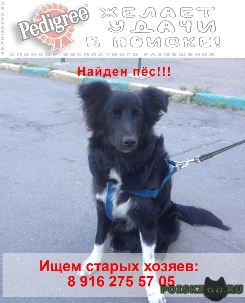 Найдена собака кобель вао молодой пес г.Москва
