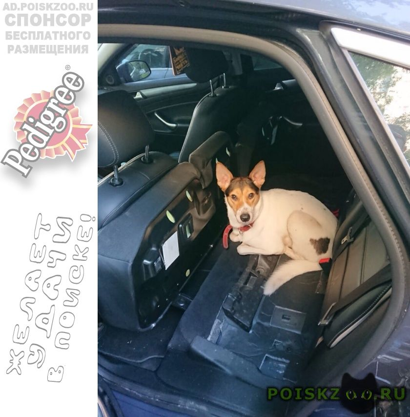 Найдена собака юао, потеряшка г.Москва