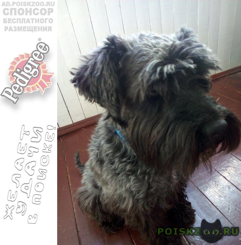 Найдена собака кобель г.Казань