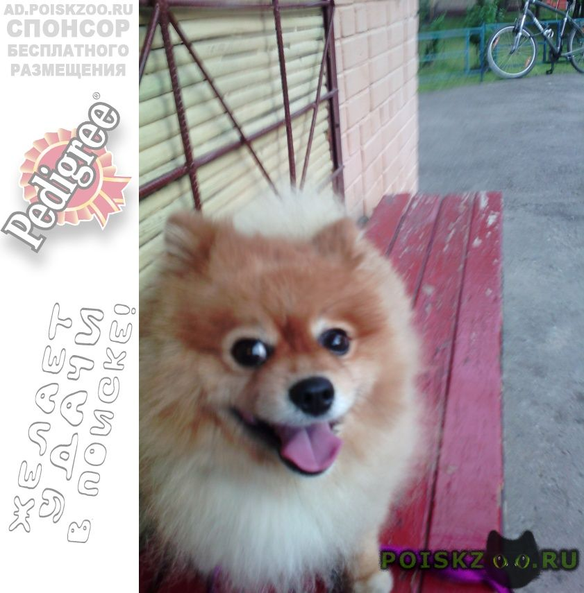 Найдена собака кобель г.Красногорск