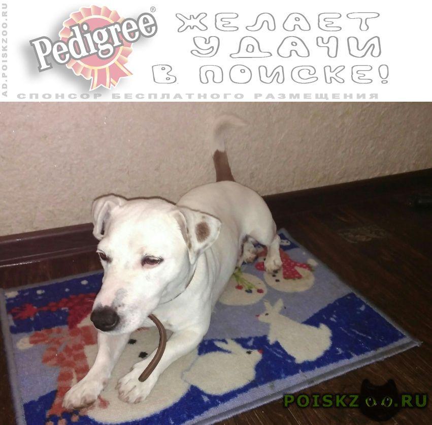 Найдена собака кобель джек рассел терьер. г.Тюмень
