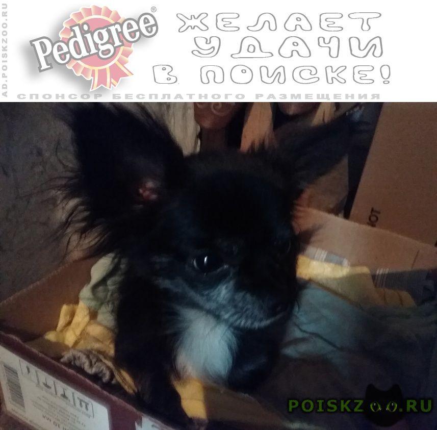 Найдена собака кобель г.Майкоп (Адыгея)