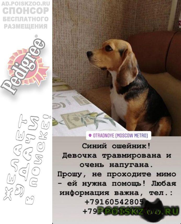 Найдена собака. г.Сходня