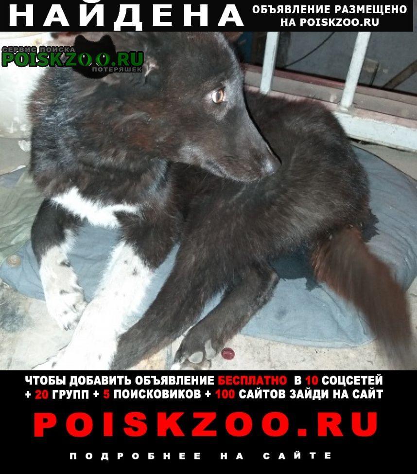 Найдена собака в мкр. солнечный Чита
