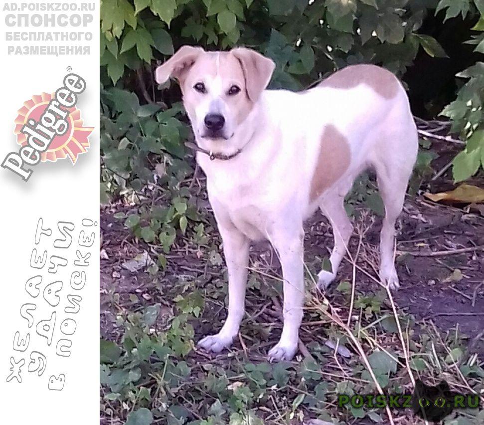 Найдена собака кобель ухоженный г.Нижний Новгород