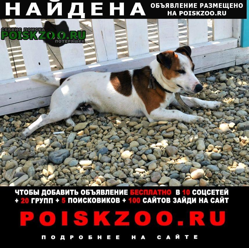 Найдена собака кобель на пляже высокого берега Анапа