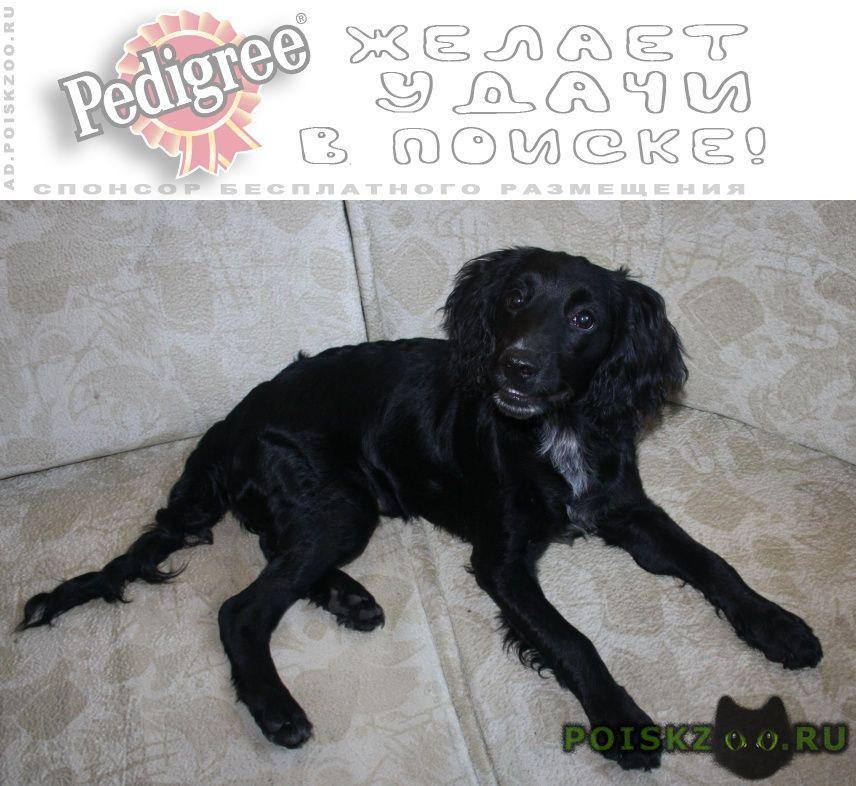 Найдена собака кобель г.Подольск