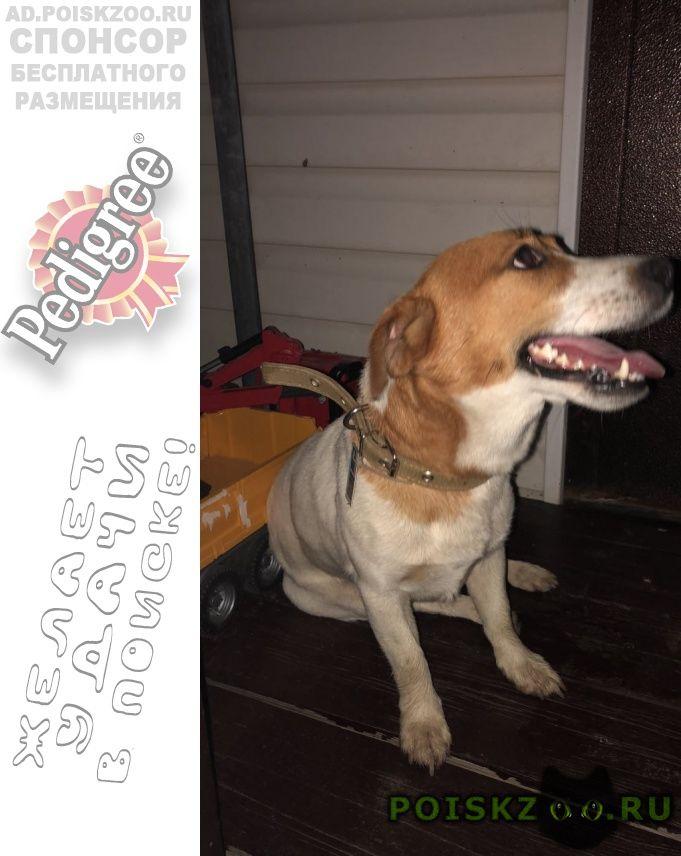 Найдена собака кобель в кп атеевка-парк ский район г.Клин