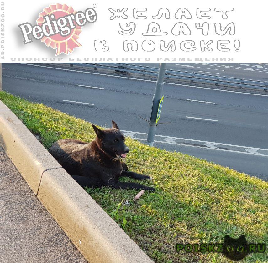 Найдена собака на пересечении каширского г.Москва