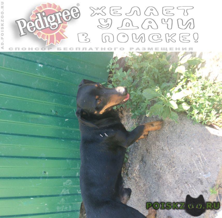 Найдена собака кобель г.Ростов-на-Дону