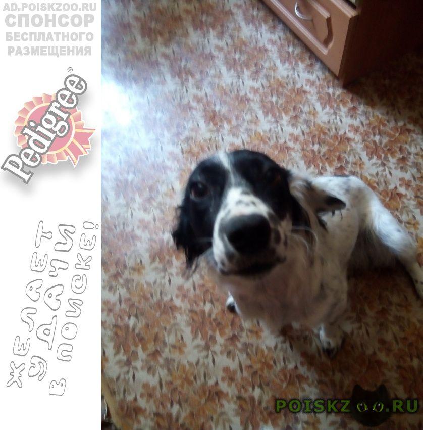 Найдена собака фото к объявлению в 11-44 06.08.2018 г.Астрахань