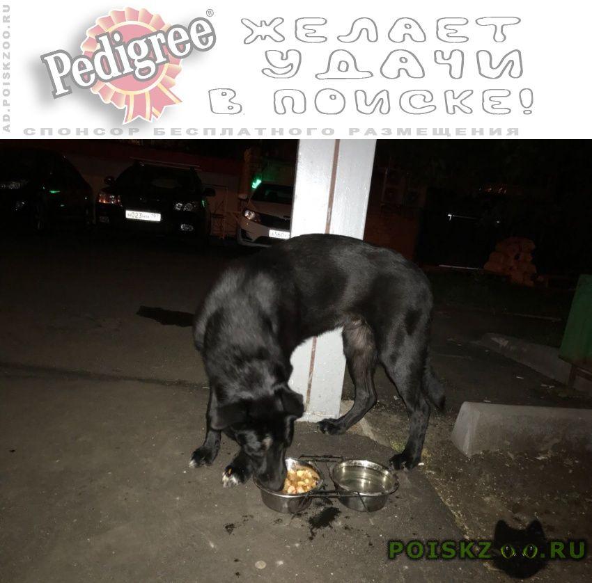 Найдена собака черная в сао г.Москва