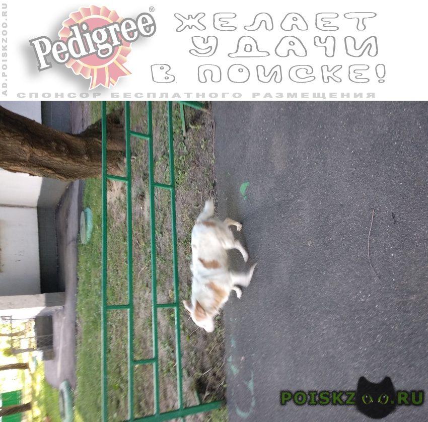 Найдена собака гуляла возле дома 7к2 на ул. цюрупы г.Москва