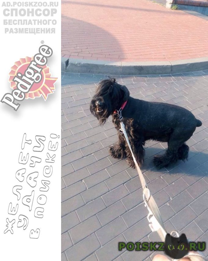 Найдена собака г.Калининград (Кенигсберг)
