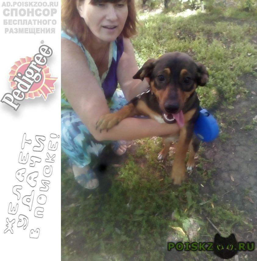 Найдена собака тасенька ищет дом       г.Омск