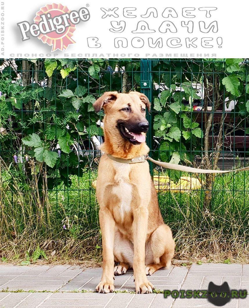 Найдена собака г.Истра