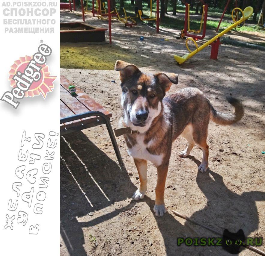 Найдена собака кобель в правде г.Правдинский