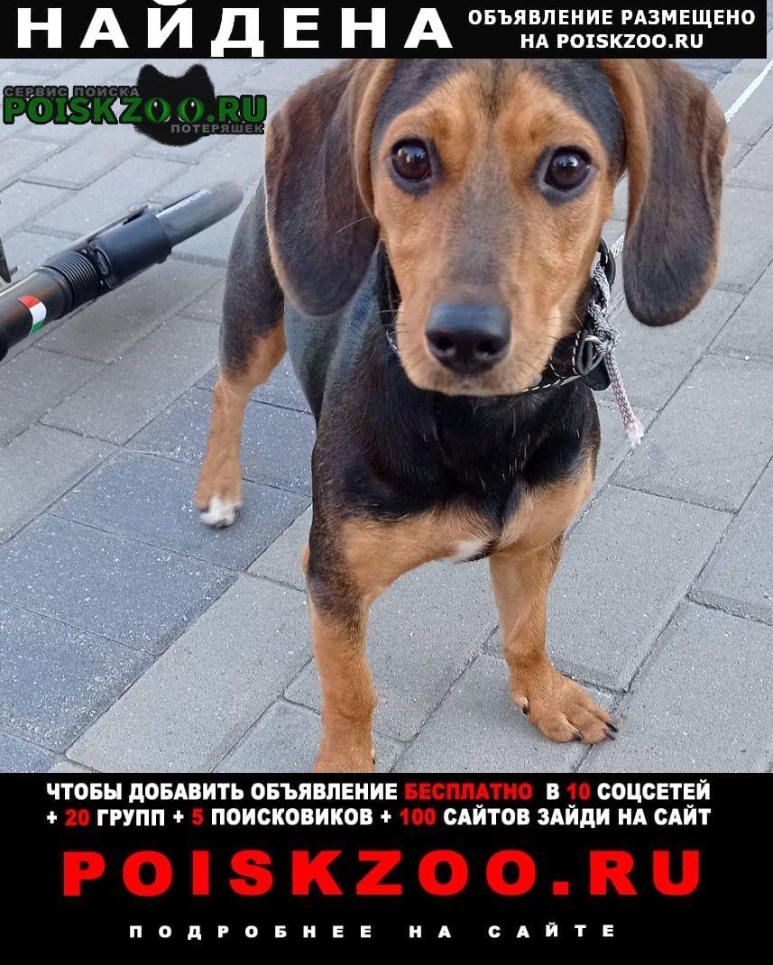 Найдена собака Щелково