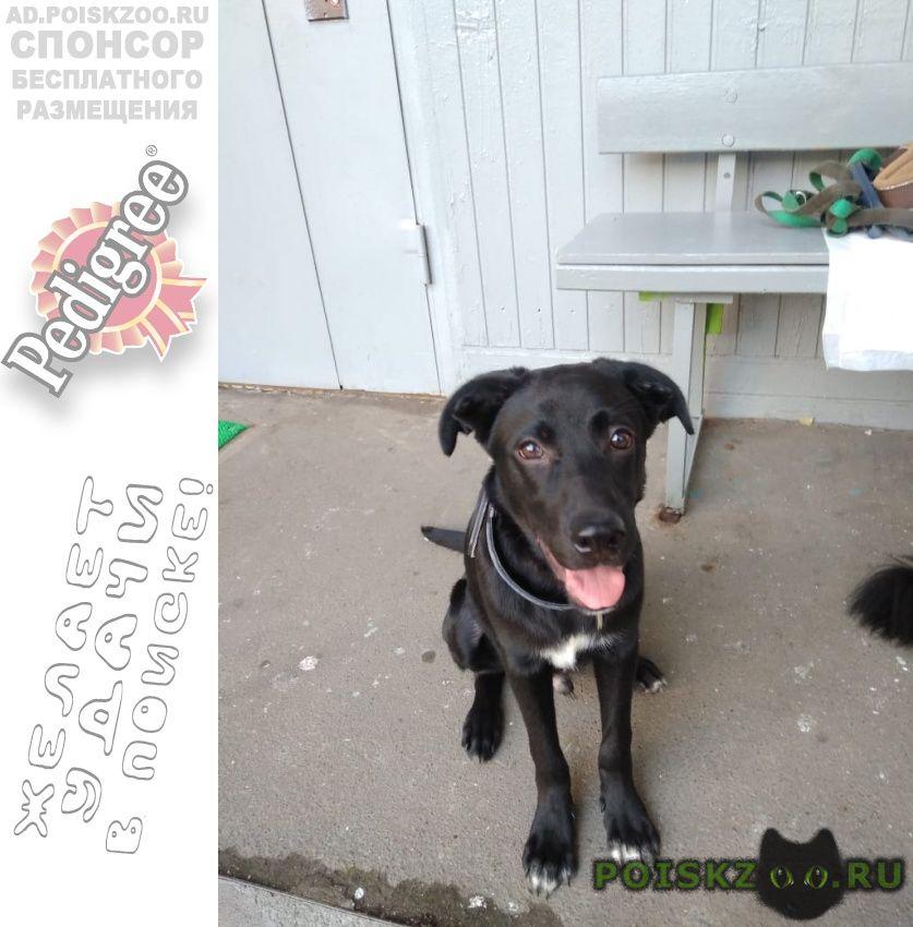Найдена собака кобель. ооочень милый щенок г.Москва