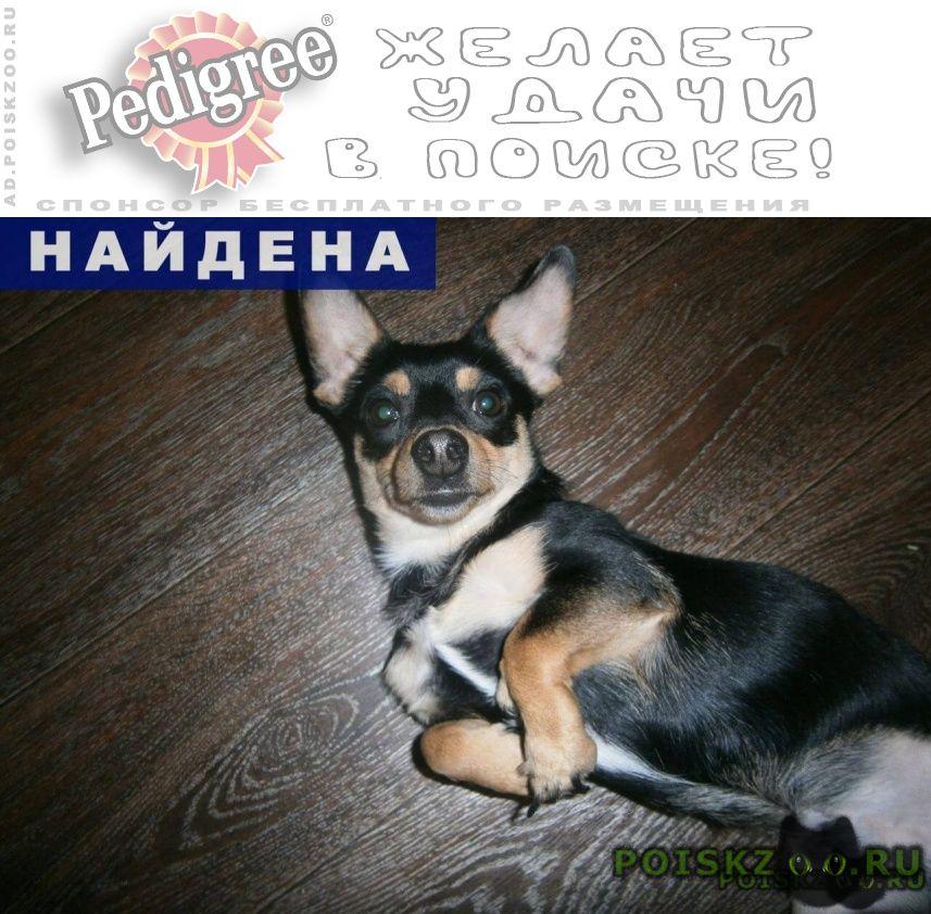 Найдена собака кобель ищем новых или старых хозяев г.Нефтеюганск