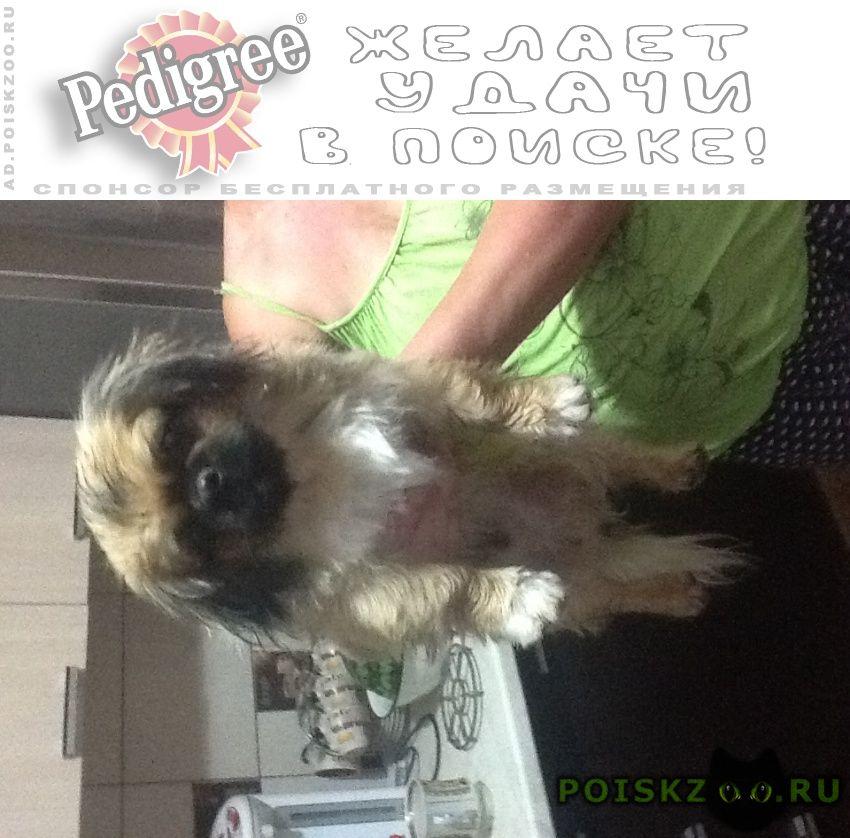 Найдена собака кобель г.Таганрог