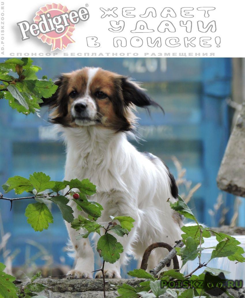 Найдена собака одинокая собачка г.Кедровка