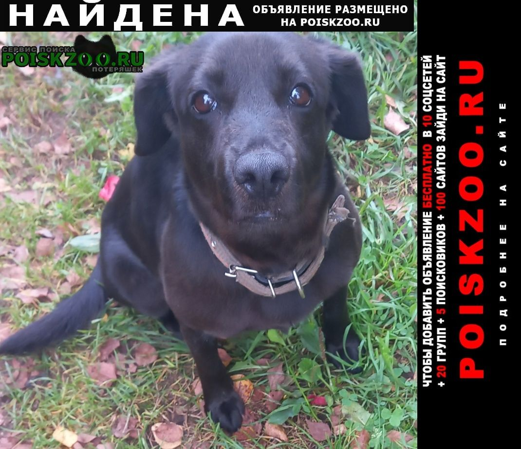 Найдена собака деревня редино, территория снт Солнечногорск