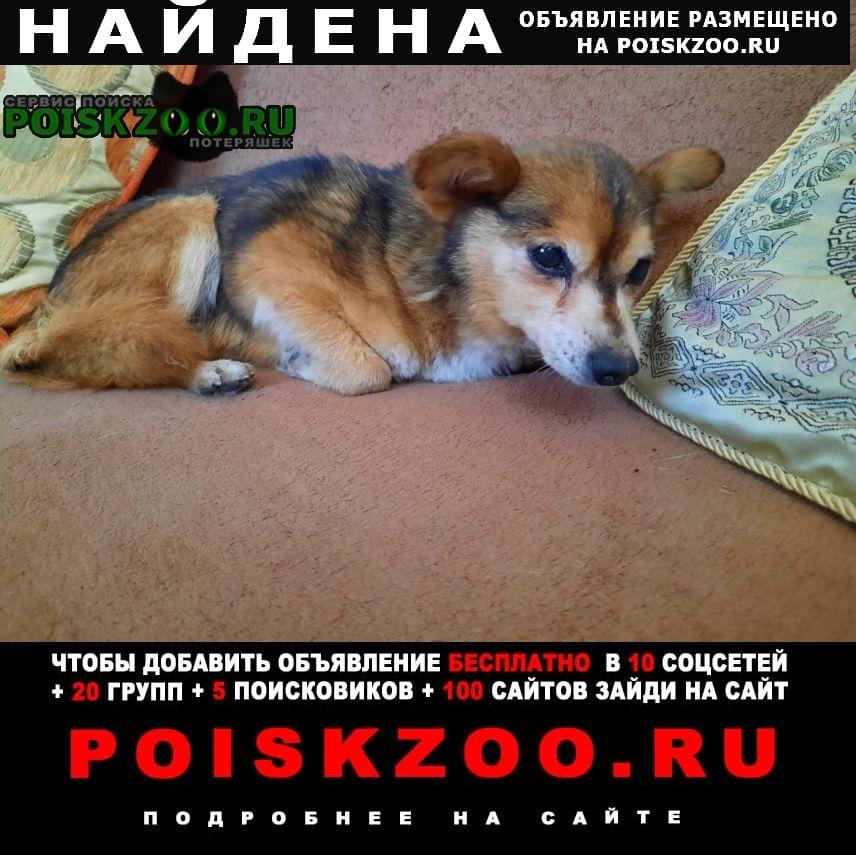 Найдена собака маленький кобелек Ростов-на-Дону
