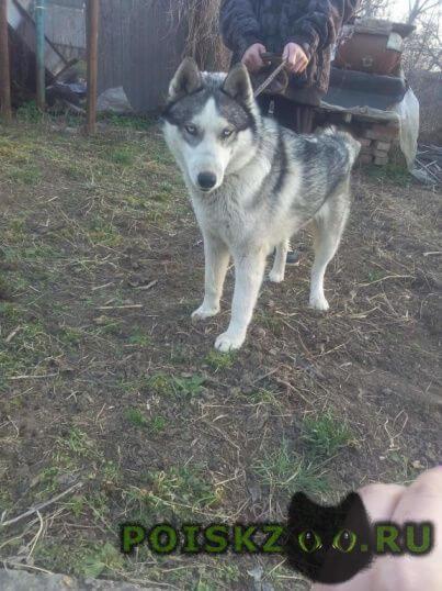 Найдена собака кобель г.Крымск