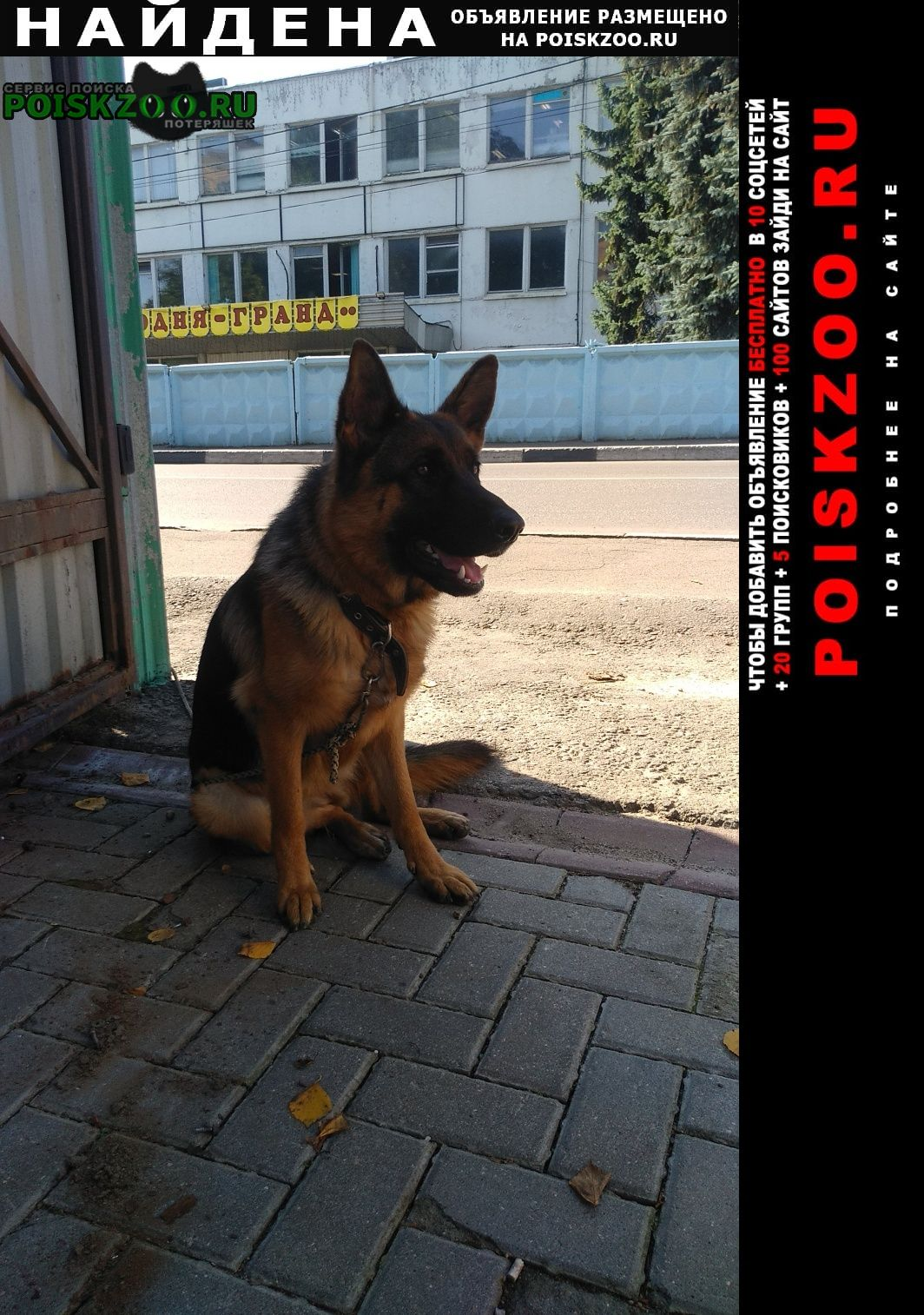 Найдена собака немецкая овчарка Сходня