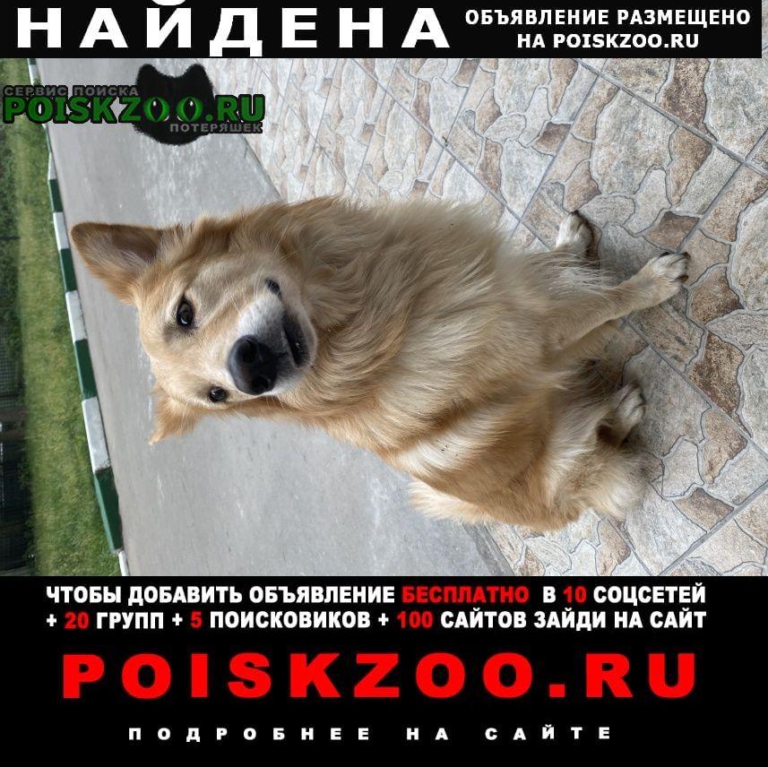 Найдена собака кобель рыжего цвета Жуковский