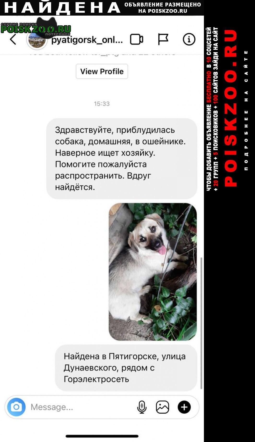 Пятигорск Найдена собака кобель