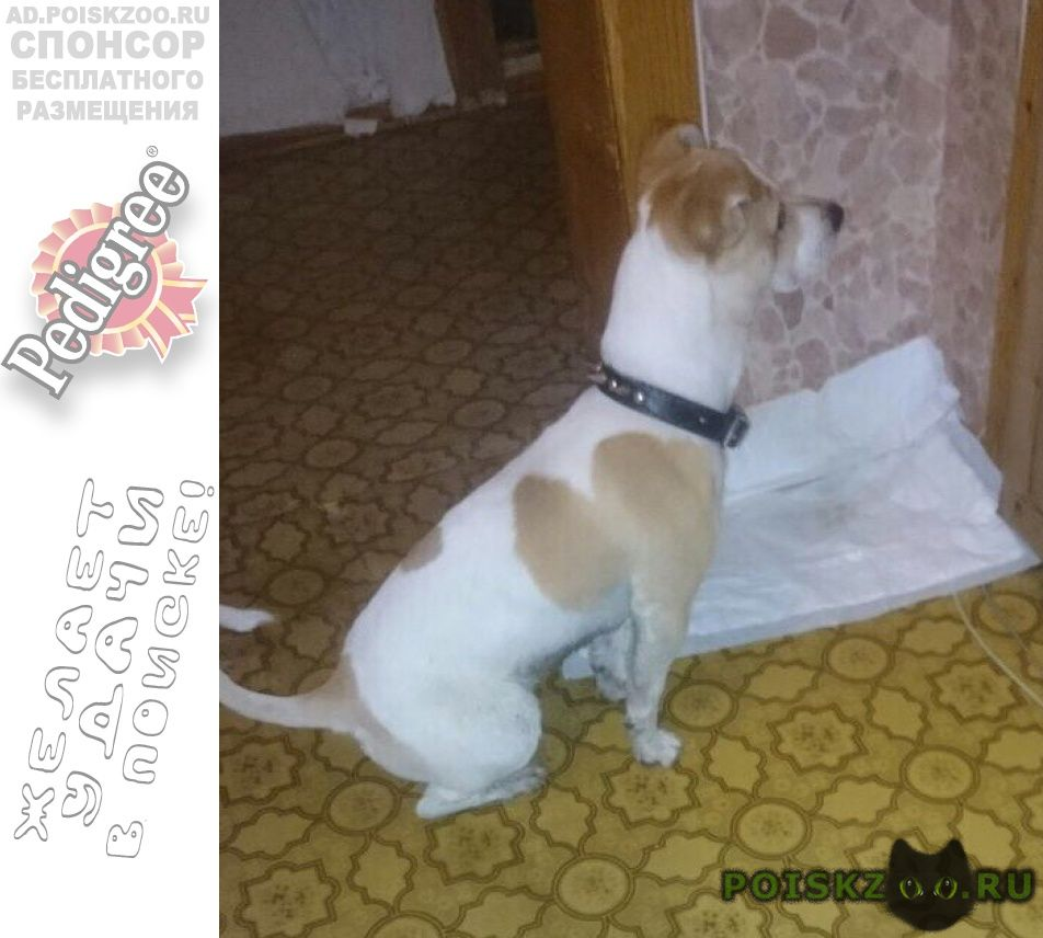 Найдена собака кобель мальчик г.Екатеринбург