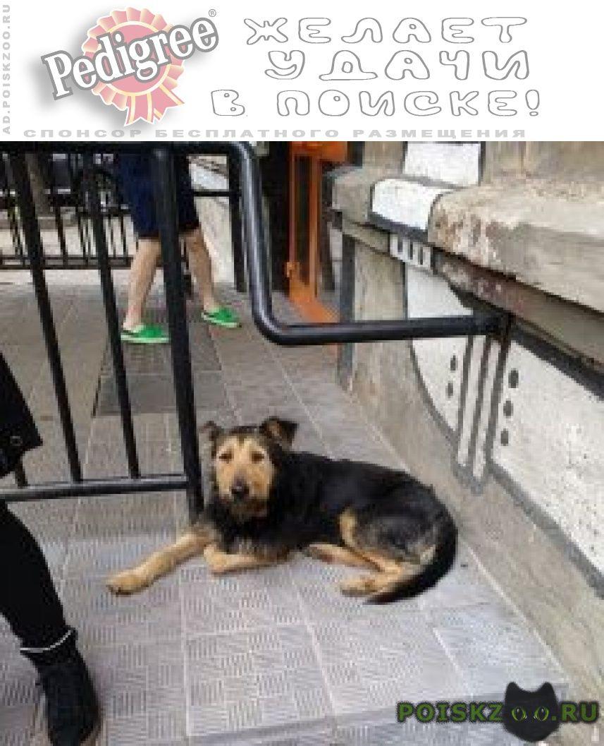 Найдена собака кобель черный пёс рядом с экспериментариумом г.Москва