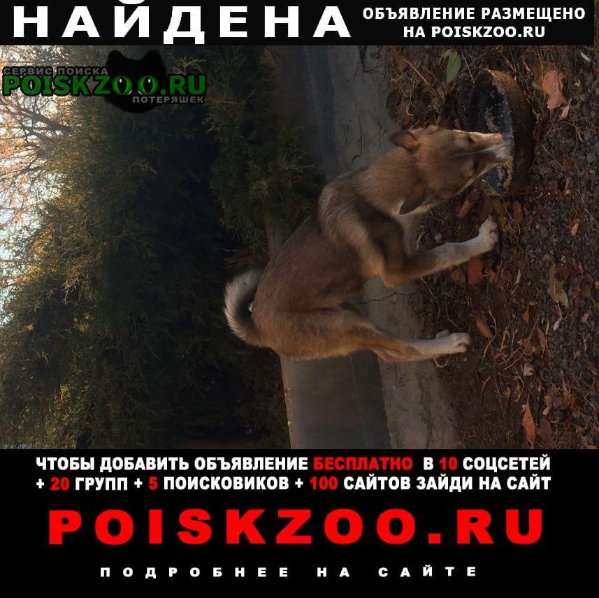 Найдена собака похож на лайку Городище (Волгоградская обл.)
