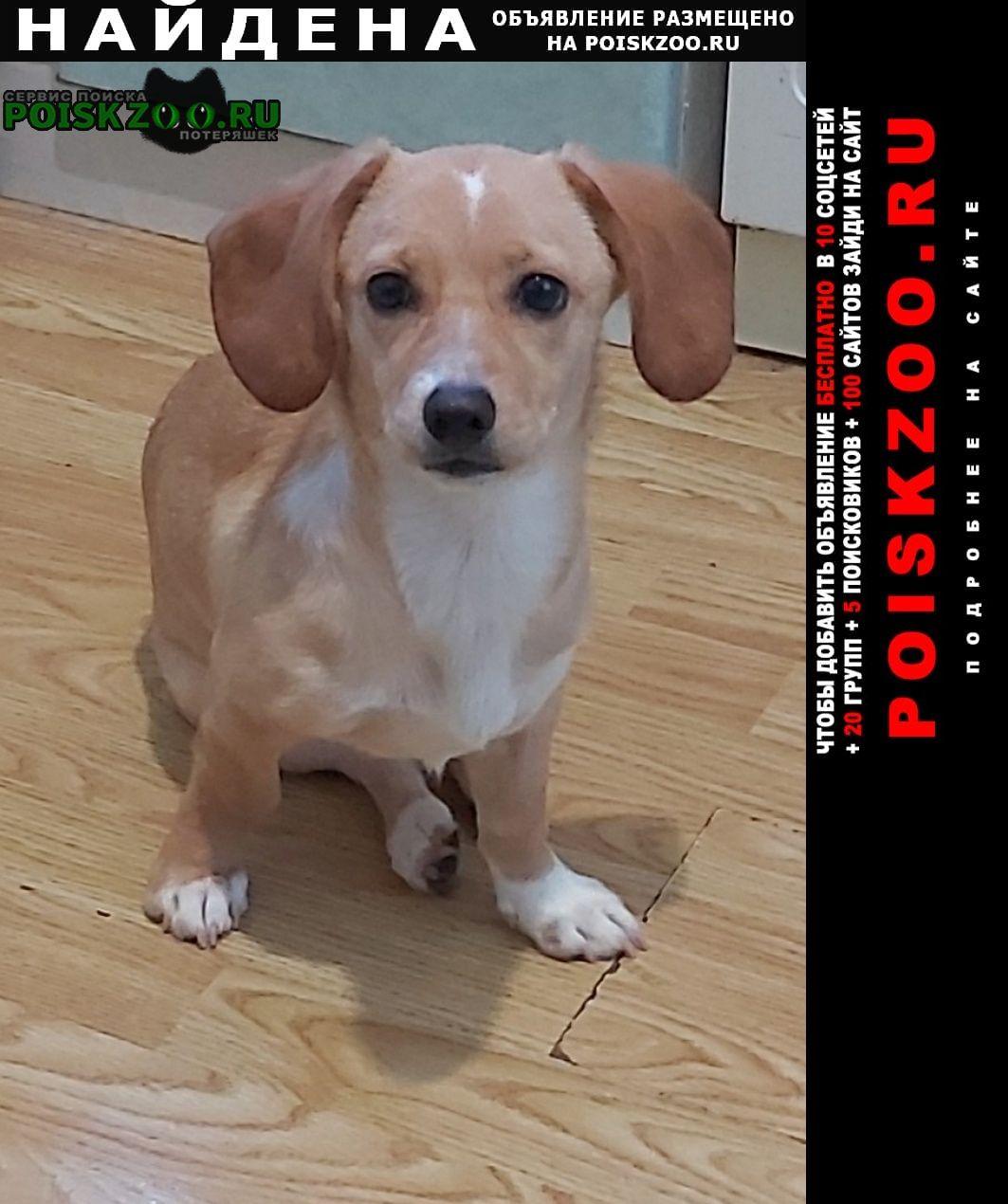 Найдена собака. Новороссийск