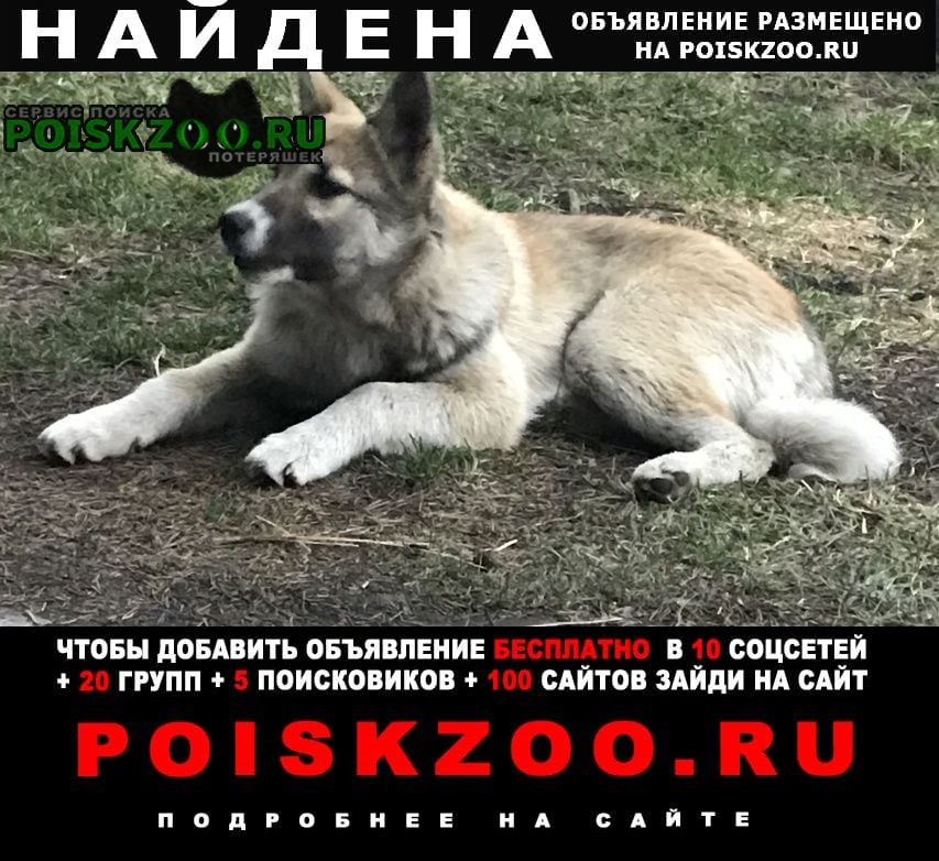 Найдена собака кобель Тюмень