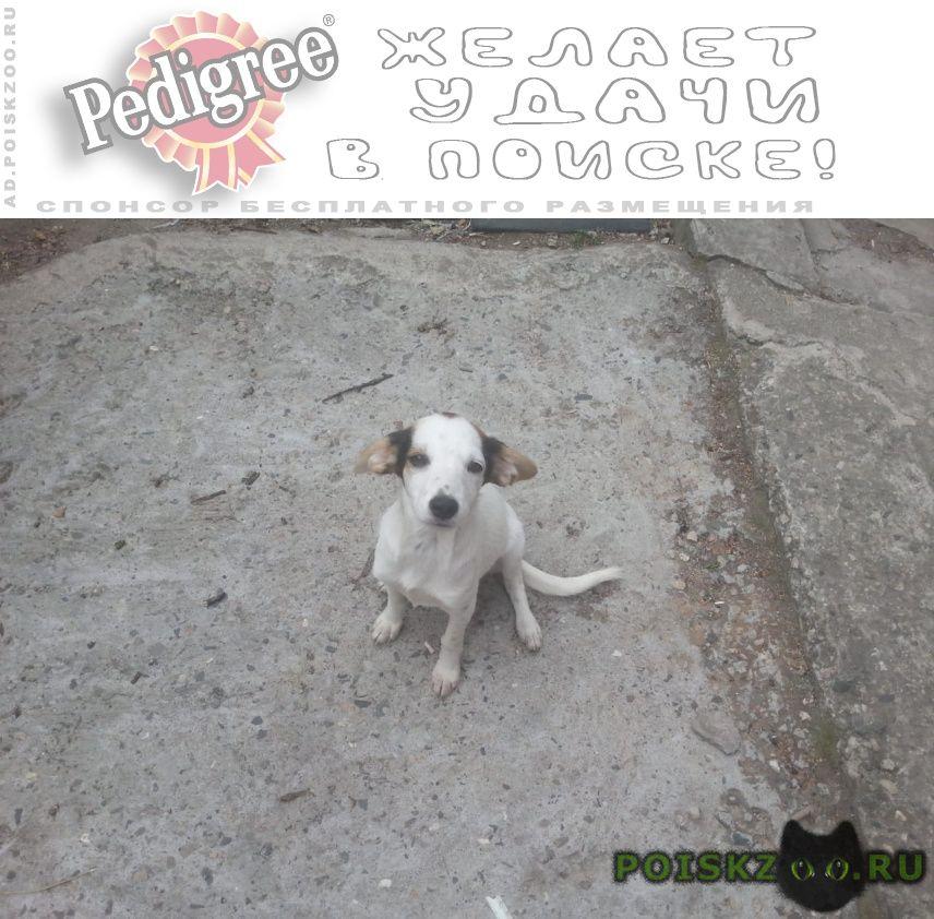 Найдена собака собачка, похоже джек рассел г.Пятигорск