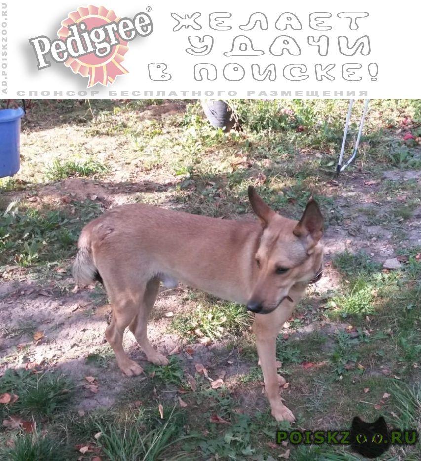 Найдена собака кобель в районе платформы силикатная г.Подольск