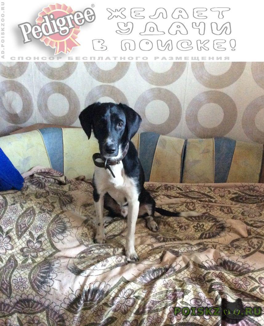 Найдена собака кобель пёс чёрный с белой грудкой г.Ярославль