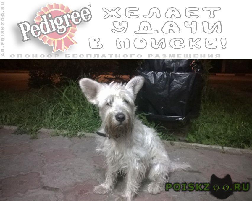Найдена собака г.Старая Купавна