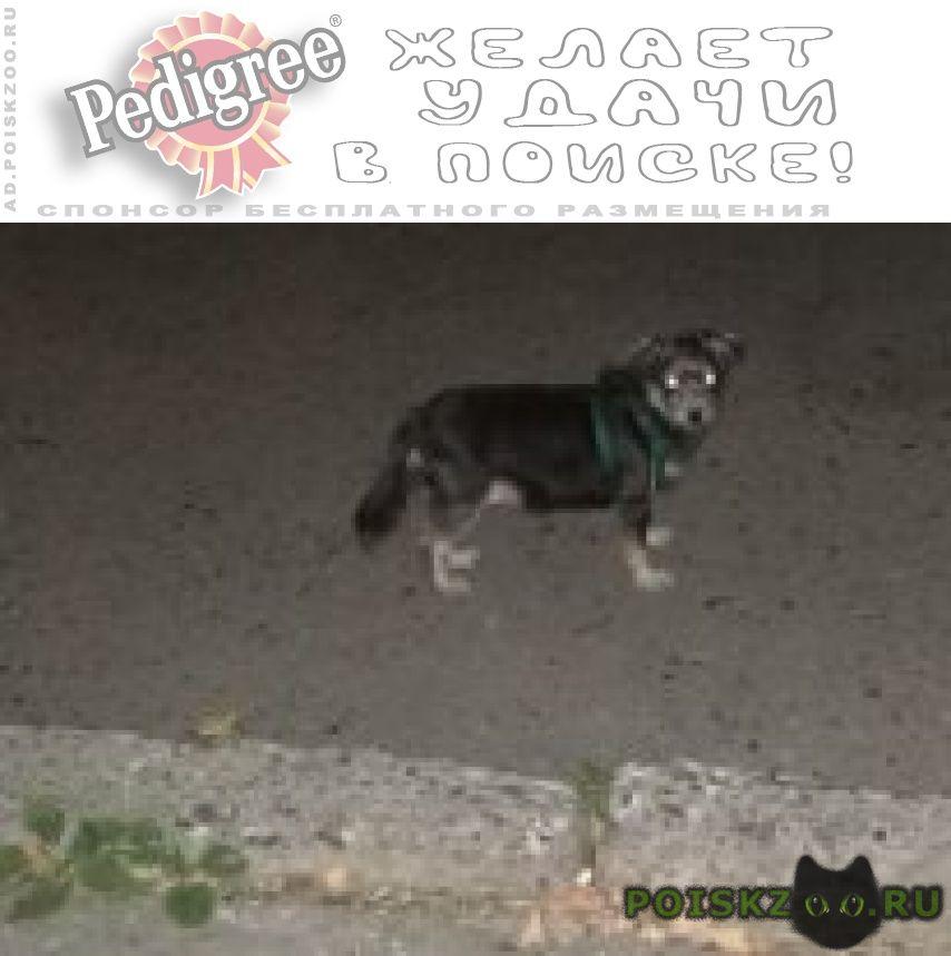 Найдена собака ищем хозяев г.Владикавказ