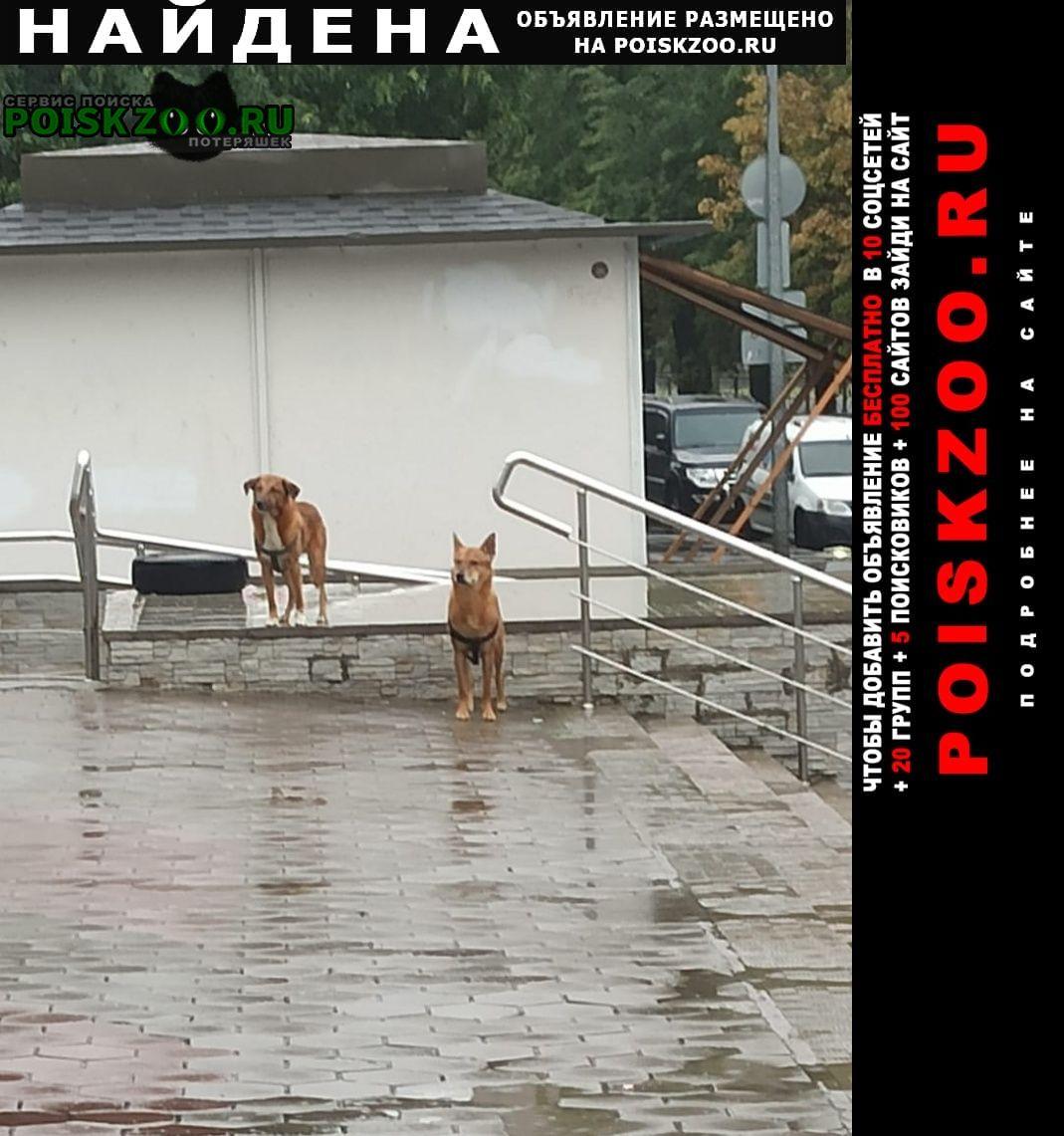 Найдена собака замечены 2 собаки Санкт-Петербург