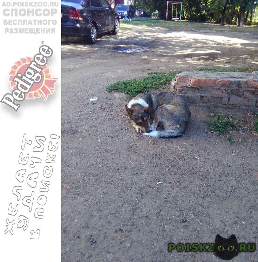 Найдена собака кобель в районе отрадная 38 г.Казань