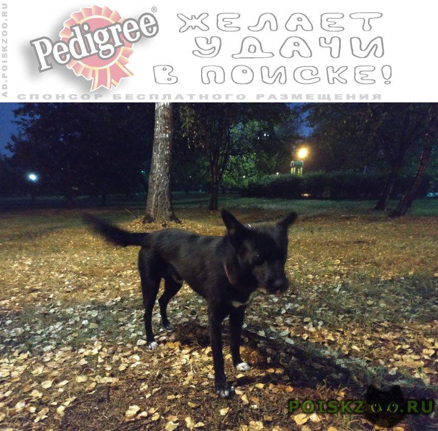 Найдена собака кобель сентября г.Москва
