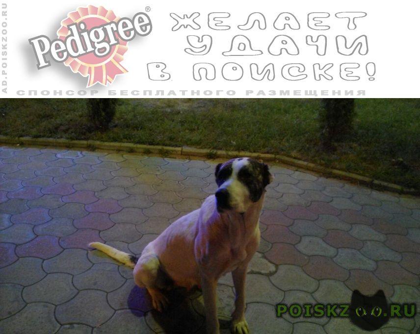 Найдена собака г.Владикавказ